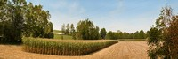 Lancaster County PA Corn Field Panorama